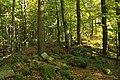 Nature reserve Ptaci stena in autumn 2011 (26).JPG