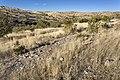 Near Chatfield Canyon - Flickr - aspidoscelis (1).jpg