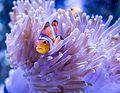 Nemo (9114390913).jpg