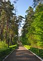 Nemyriv Park Lv RB.jpg