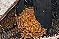 Nest der Hornisse.jpg