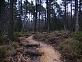 New mountain bike trail in Dalby Forest - geograph.org.uk - 343720.jpg
