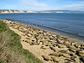 North Drakes Beach Colony (abfa1576-ef95-46ca-af9e-57f582090c6c).jpg