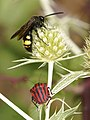 Nostres amics, els insectes - Nuestros amigos, los insectos - Friends insects (5169075412).jpg