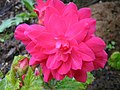 Nova Scotia Blomidon Inn Flower 19 (23461868).jpg