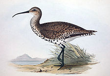 Illustration från ca 1830.