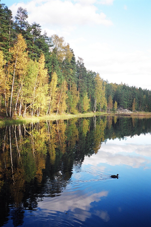 Nuuksio National Park - Nuuksio in the autumn
