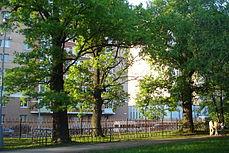 Oaks (Quercus robur) in Vorontsovo manor Park.JPG