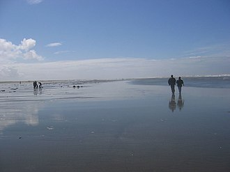 Ocean Shores, Washington - Digging for razor clams on the beach