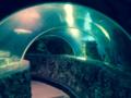 Ocean tunnel.png
