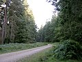 Off-road cycle route between Denny Lodge Inclosure and Stubby Copse Inclosure, New Forest - geograph.org.uk - 43067.jpg