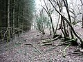 Old and new woodland - geograph.org.uk - 671760.jpg
