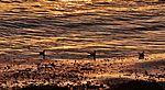On the Beach IMG 0221 (18710202348).jpg