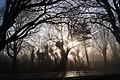 One misty morning (16218554387).jpg