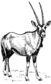 Oryx (PSF).png