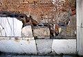 Ostia Antica Terme del Foro Wall Heating.jpg