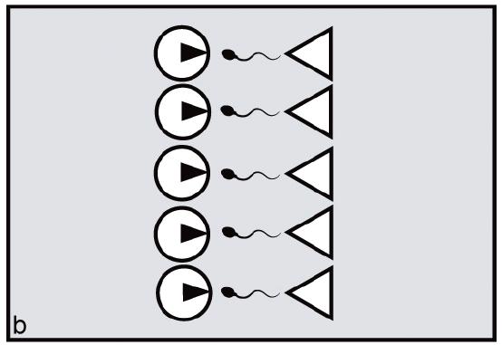 File:Ovulatory synchrony undermines male harem-holding.tiff