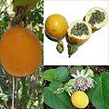 Owoce Granadilla.jpg