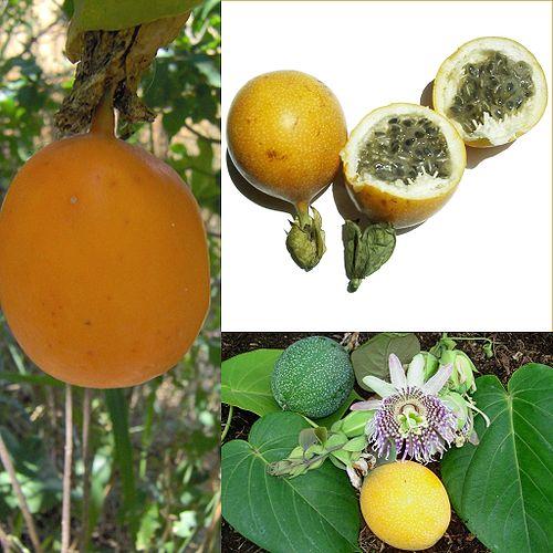 500px owoce granadilla