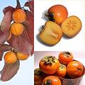 Owoce Persymona.jpg