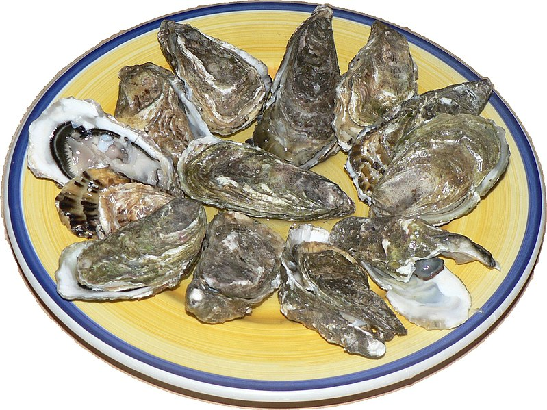 Raw oysters, opened, and presented on a plate.