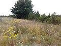 Põld Saaristelt Tammikusse,Kõruse - 2013-07-25 18.10.10 - panoramio.jpg
