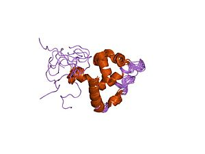 ARID domain - human mrf-2 domain, nmr, 11 structures