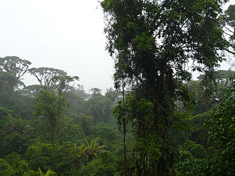 Braulio Carrillo National Park - Talamancan montane forests in the park.