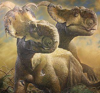 Pachyrhinosaurus - Restoration of two P. perotorum