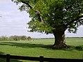 Paddocks at Holdenby - geograph.org.uk - 446875.jpg