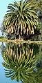 Palm Reflection, Ford Park, Redlands, CA 08 (25786702236).jpg