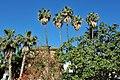 Palms Malaga.jpg
