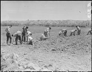 Parker High School (Arizona) - Parker High School students planting guayule at the Poston War Relocation Center on April 9, 1942