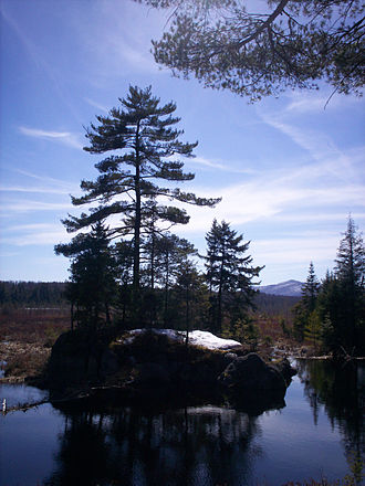 Adirondack Park Agency - The Paul Smiths Visitor Information Center, Heron Marsh from the Barnum Brook Trail