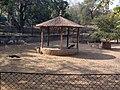 Peacocks at Zoo.jpg