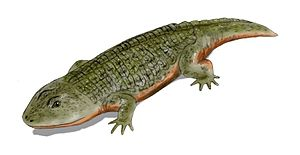 Stereospondyli - Life restoration of Peltobatrachus pustulatus