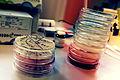 Petri tassid laboris.jpg