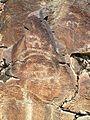 Petroglyphs of Bashkyzylsay (goats).jpg