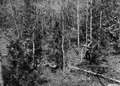 Photograph of Forest Officer Roger White - NARA - 2128378.tif