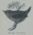 Picture Natural History - No 109 - The Wren.png