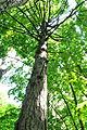 Pidhorodne-modryna-n1-15058024.jpg