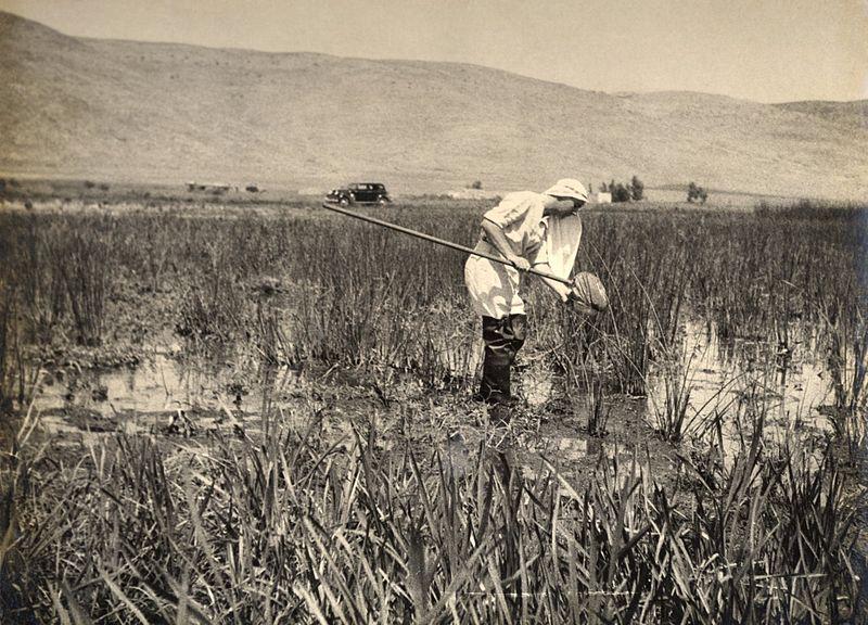 עובד של תחנת האנטי מלרה  בביצות החולה