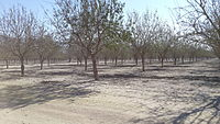 PikiWiki Israel 46414 tree.jpg