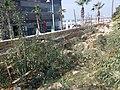 PikiWiki Israel 59501 port of jaffa.jpg