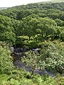 Piles Copse and the River Erme - geograph.org.uk - 1357385.jpg