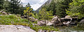 Pinguicula corsica in its natural habitat, Corsica.jpg