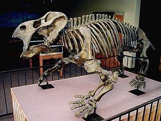 Placerias - Skeleton