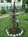 Planta de Kiwicha en el Jardín Botánico de Lima.jpg