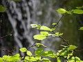Plante (03).jpg