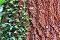 Plants kornik arboretum.jpg